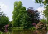 06-schlossgarten-tulpenbaum-muehlenhunte