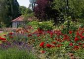 12-schlossgarten-rosengarten